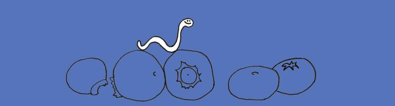 Blueberryfinal